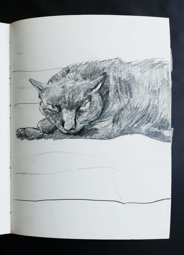 A balck cat in pencils
