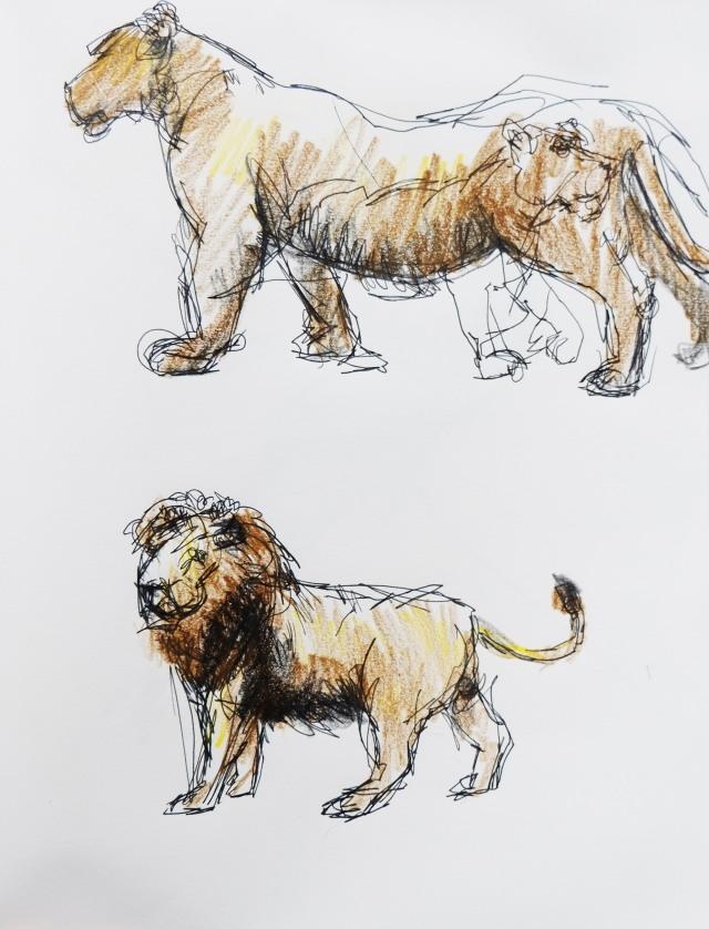 london-zoo-3-lions