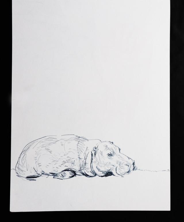 london-zoo-pygmy-hippo