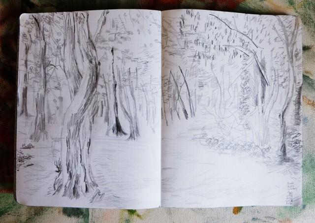 Highgate woods 020818